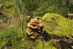 森林草图 库存照片
