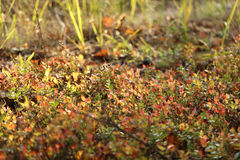 森林草本地毯在阳光下 免版税库存照片