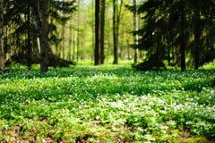 森林草甸 库存照片