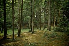 森林草绿色混杂的结构树走道 库存照片