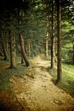 森林草绿色混杂的结构树走道 库存图片