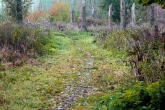 森林草道路 库存照片