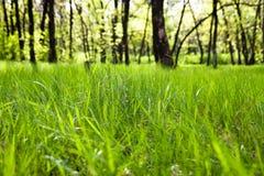 森林草 图库摄影