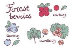 森林莓果汇集 免版税库存图片