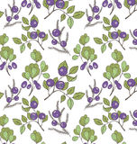 森林莓果的样式 图库摄影