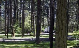 森林营地 库存图片