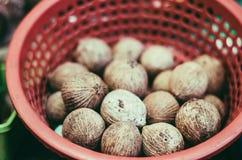 森林葱Scorodocarpus Borneensis Becc可以在热带森林只找到 免版税库存照片