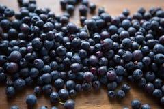 森林蓝莓 库存图片