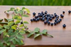 森林蓝莓 免版税库存图片