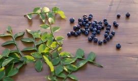 森林蓝莓 图库摄影