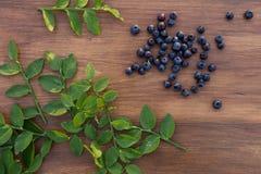 森林蓝莓 库存照片