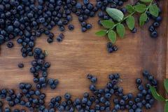 森林蓝莓 免版税图库摄影