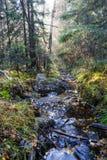 森林薄雾光芒和小河 库存图片