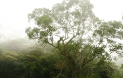 森林薄雾结构树 免版税库存照片