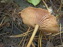 森林蘑菇照片 免版税库存图片
