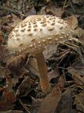 森林蘑菇照片 免版税图库摄影