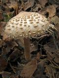 森林蘑菇照片 免版税库存照片