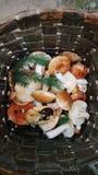 森林蘑菇的混合从篮子的森林带来的,乡下生活 库存图片