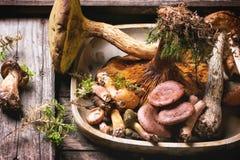 森林蘑菇的混合 免版税库存图片