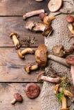 森林蘑菇的混合 库存图片