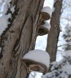 森林蘑菇 免版税图库摄影