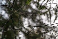 森林蜘蛛网特写镜头 免版税库存图片