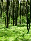 森林行程 库存照片