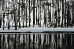 森林被反射的河 免版税库存照片