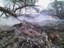 森林被烧的灰 免版税图库摄影