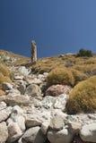 森林被石化的希腊lesvos 免版税库存图片