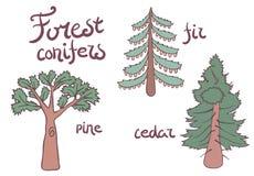 森林被设置的针叶树树 计划 库存图片