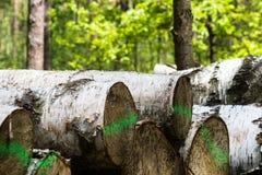 森林裁减,被切开的杉木,桦树日志按顺序在立方体的安排了 免版税库存照片