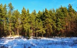 森林装饰地球 他们教一个人了解美丽和启发他以一种庄严心情 免版税库存照片
