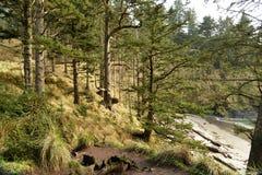 森林西北和平的雨 免版税库存照片