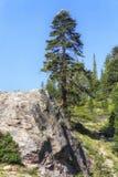 森林观看在声势浩大的湖区域,美国 库存图片
