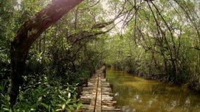 森林视图在柬埔寨 免版税库存照片
