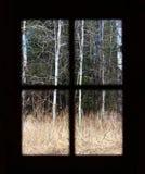 森林视图 免版税库存图片
