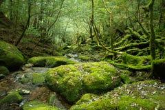 森林视图 库存图片