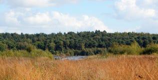 森林视图 图库摄影