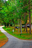 森林议院 免版税库存图片