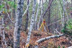 森林调查 库存照片