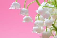森林谷的百合铃兰草花束在桃红色背景的 免版税库存照片