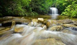 森林豪华的雨瀑布 免版税库存图片