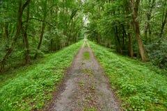 森林走的路线 免版税库存照片