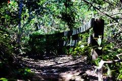 森林走道 图库摄影