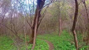 森林走 股票视频