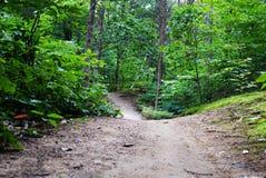 森林足迹上上下下蜿蜒 库存照片