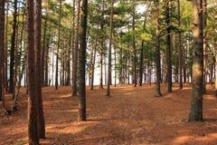 森林足迹在密执安 库存照片
