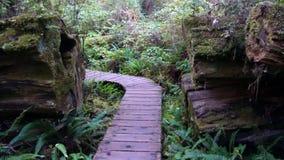 森林足迹在英国哥伦比亚 库存照片