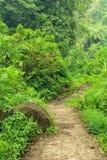 森林足迹在Madakaripura瀑布地区 图库摄影